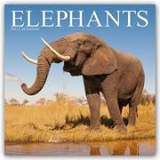 Cover-Bild zu Elephants - Elefanten 2022 - 18-Monatskalender