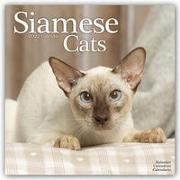 Cover-Bild zu Siamese Cats - Siam-Katzen 2022 - 16-Monatskalender