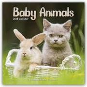 Cover-Bild zu Baby Animals - Tierbabys 2022 - 18-Monatskalender