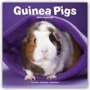 Cover-Bild zu Guinea Pigs - Meerschweinchen 2022 - 18-Monatskalender