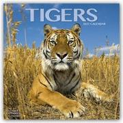 Cover-Bild zu Tigers - Tiger 2022 - 18-Monatskalender