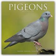 Cover-Bild zu Pigeons - Tauben 2022