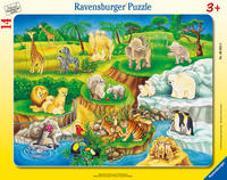 Cover-Bild zu Ravensburger Kinderpuzzle - 06052 Zoobesuch - Rahmenpuzzle für Kinder ab 3 Jahren, mit 14 Teilen