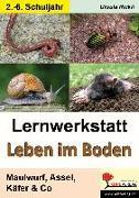 Cover-Bild zu Lernwerkstatt Leben im Boden von Rickli, Ursula
