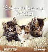 Cover-Bild zu teNeues Calendars & Stationery GmbH & Co. KG: Schmusekatzen 2021 - Postkarten-Kalender - Kalender-mit-Postkarten - zum-raustrennen - 16x17