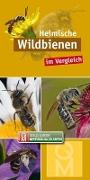 Cover-Bild zu Heimische Wildbienen von Quelle & Meyer Verlag (Hrsg.)