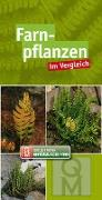 Cover-Bild zu Farnpflanzen im Vergleich von Quelle & Meyer Verlag (Hrsg.)
