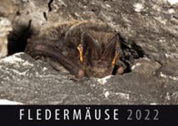 Cover-Bild zu Fledermäuse 2022 von Quelle & Meyer Verlag (Hrsg.)