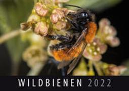Cover-Bild zu Wildbienen 2022 von Quelle & Meyer Verlag (Hrsg.)