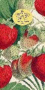 Cover-Bild zu John Derian Paper Goods: Kitchen Delights 80-Page Notepad von Derian, John