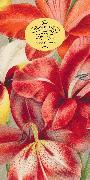 Cover-Bild zu John Derian Paper Goods: In the Garden 80-Page Notepad von Derian, John