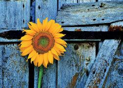 Cover-Bild zu Eschbach Grusskarten B6. Blume als Zeichen