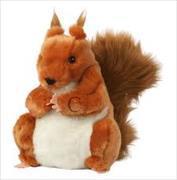 Cover-Bild zu Handpuppe Eichhörnchen