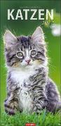 Cover-Bild zu Katzen Kalender 2022 von Klein, Jean-Louis
