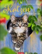Cover-Bild zu Katzen auf dem Lande Kalender 2022 von Klein, Jean-Louis