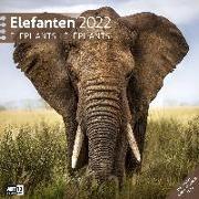 Cover-Bild zu Elefanten Kalender 2022 - 30x30 von Ackermann Kunstverlag (Hrsg.)