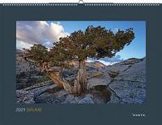 Cover-Bild zu Bäume 2021 von KUNTH Verlag (Hrsg.)