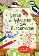 Cover-Bild zu Tiere des Waldes zum Durchpausen von Döring, Hans-Günther (Illustr.)