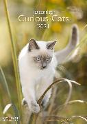 Cover-Bild zu Curious Cats 2021 A&I INT 29,7x42