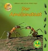 Cover-Bild zu Der Ameisenstaat von Fischer-Nagel, Heiderose