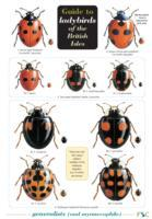 Cover-Bild zu Guide to Ladybirds of the British Isles von Majerus, Michael