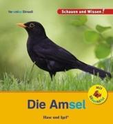 Cover-Bild zu Straaß, Veronika: Die Amsel / Sonderausgabe mit Silbenhilfe