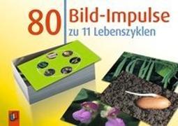 Cover-Bild zu 80 Bild-Impulse: 11 Lebenszyklen von Creative Teaching Press Inc.