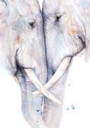 Cover-Bild zu Postkarten Elefanten