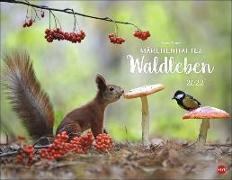 Cover-Bild zu Vadim Trunov: Märchenhaftes Waldleben Posterkalender 2022