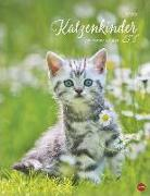 Cover-Bild zu Katzenkinder Posterkalender 2022
