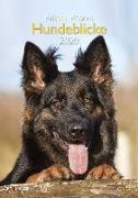 Cover-Bild zu Hundeblicke 2020 A&I