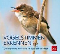 Cover-Bild zu Vogelstimmen erkennen / CD
