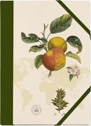 Cover-Bild zu Kew Gardens Sammelmappe - Motiv Apfel von Schöll, Stephan (Gestaltet)