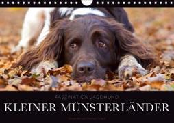 Cover-Bild zu Gerlach, Nadine: Faszination Jagdhund - Kleiner Münsterländer (Wandkalender 2021 DIN A4 quer)