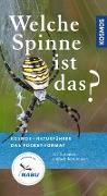 Cover-Bild zu Welche Spinne ist das? von Baehr, Martin