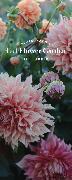 Cover-Bild zu Floret Farm's Cut Flower Garden List Ledger von Benzakein, Erin