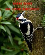 Cover-Bild zu Fantastische Tiergeschichten (eBook) von Sener, Sabine