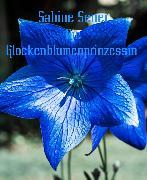 Cover-Bild zu Die Glockenblumenprinzessin (eBook) von Sener, Sabine
