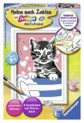 Cover-Bild zu Kleines Kätzchen - Mal-Set