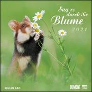 Cover-Bild zu Sag es durch die Blume 2021 - Hamster, Eichhörnchen, Zwiesel in Nahaufnahme - Wandkalender mit Spiralbindung - DUMONT Quadratformat 24 x 24 cm von Rad, Julian (Fotograf)