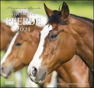 Cover-Bild zu geliebte Pferde 2021 - DUMONT-Wandkalender - Format 38,0 x 35,5 cm von Slawik, Christiane (Fotogr.)
