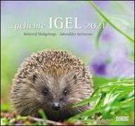Cover-Bild zu geliebte Igel 2021 - DUMONT Wandkalender - mit den wichtigsten Feiertagen - Format 38,0 x 35,5 cm von Dumont Kalenderverlag (Hrsg.)