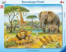 Cover-Bild zu Afrikas Tierwelt