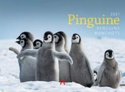 Cover-Bild zu Pinguine Kalender 2021 von Ackermann Kunstverlag (Hrsg.)