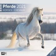 Cover-Bild zu Pferde Kalender 2021 - 30x30 von Ackermann Kunstverlag (Hrsg.)