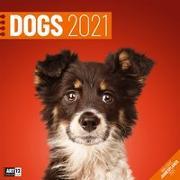 Cover-Bild zu Dogs Kalender 2021 - 30x30 von Ackermann Kunstverlag (Hrsg.)
