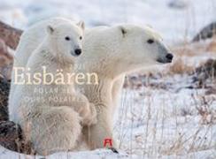 Cover-Bild zu Eisbären Kalender 2021 von Ackermann Kunstverlag (Hrsg.)