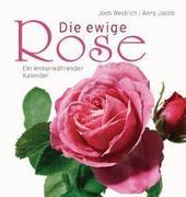 Die ewige Rose von Jacob, Anny