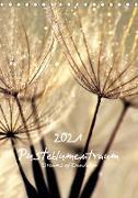 Cover-Bild zu Pusteblumentraum - Dreams of Dandelion (Tischkalender 2021 DIN A5 hoch) von Delgado, Julia