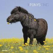 Cover-Bild zu Ponys 2022 - Broschürenkalender 30x30 cm (30x60 geöffnet) - Kalender mit Platz für Notizen - Ponies - Bildkalender - Wandplaner - Alpha Edition von Alpha Edition (Hrsg.)